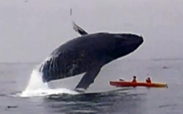 balenacaiac.jpg