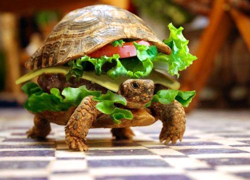 turtle-hamburger.jpg